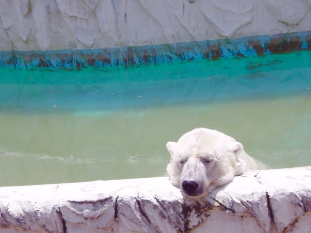 white-bear